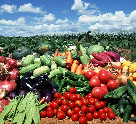 野菜もりだくさん.jpg